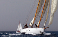 Voile Palmo